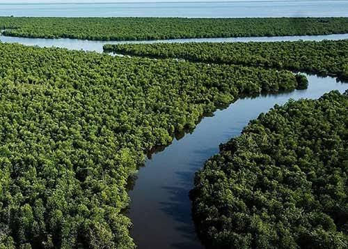 Kawasan Hutan Bakau
